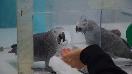 Попугаи жако прошли «тест на доброту», с которым не справились шимпанзе (ФОТО, ВИДЕО)