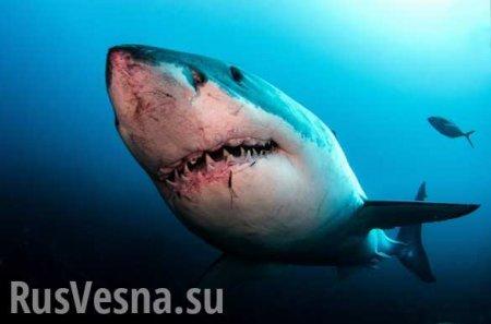 Акулы растерзали футболиста (ФОТО)