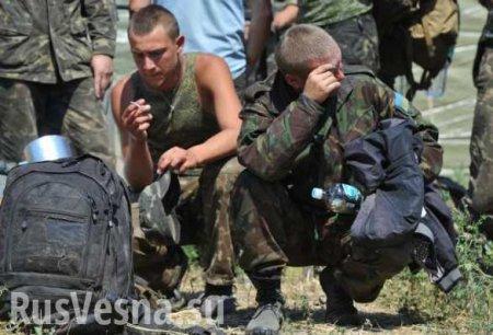 Охота на крыс: на Украине идёт охота на боевиков «АТО»