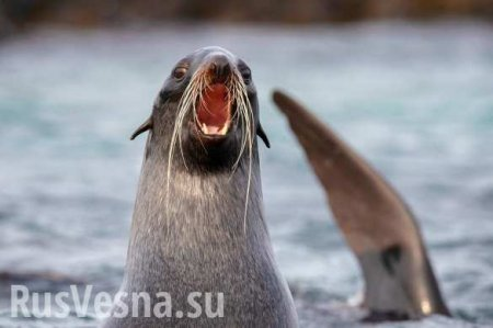 Савченко искупалась вСеверном Ледовитом океане (ВИДЕО)