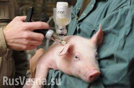 Подорвавшихся боевиков ВСУ теперь лечат ветеринары
