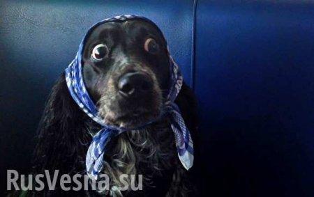Испанцам предлагают собак в аренду, чтобы обойти карантин (ВИДЕО)
