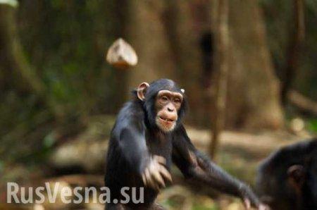 Хроники одичания: На Украине маршрутку забросали камнями из-за отказа водителя перевезти более 10 человек