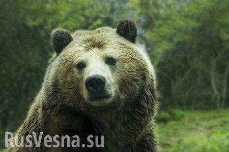Посмотреть на панд и котиков: мировые зоопарки предлагают свой рецепт против паники (ВИДЕО)