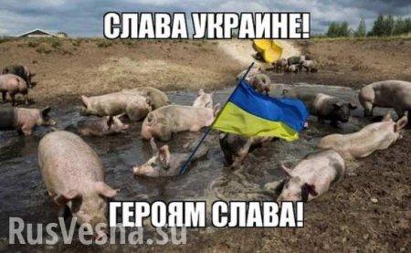 Инфекция наступает, а ВСУ крадут свиней: сводка с Донбасса (+ВИДЕО)
