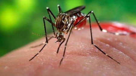 Больше ладони: в Китае поймали самое большое в мире жалящее насекомое (ФОТО ...
