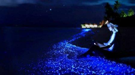 Завораживающее зрелище: свечение океана поразило пользователей Сети (ВИДЕО)