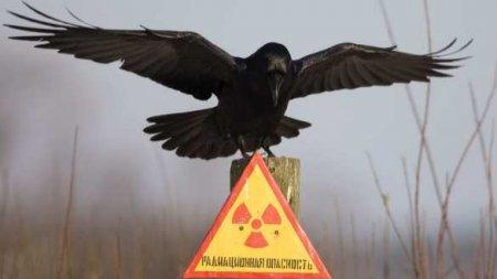 «Новый Чернобыль?» — Госдеп предлагает помочь России: реакция МИД и МЧС