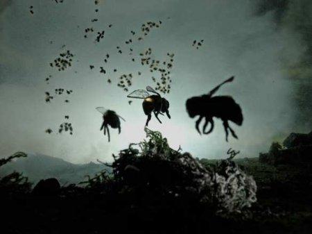 «Апокалипсис насекомых»: кому грозит исчезновение?