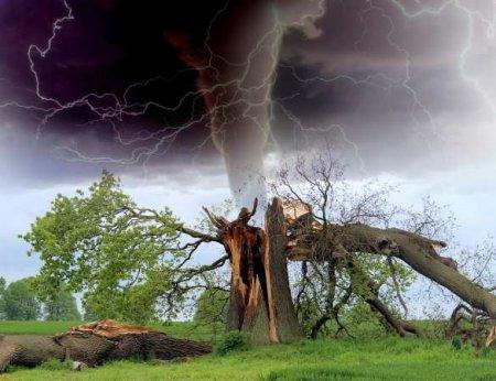 Ураган в Москве и Подмосковье: множество упавших деревьев, травмированы люди, без света тысячи жителей (ФОТО, ВИДЕО)