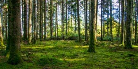 Элитный жилой комплекс с «вертикальным лесом» превратился в декорацию к фильму-катастрофе (ФОТО)