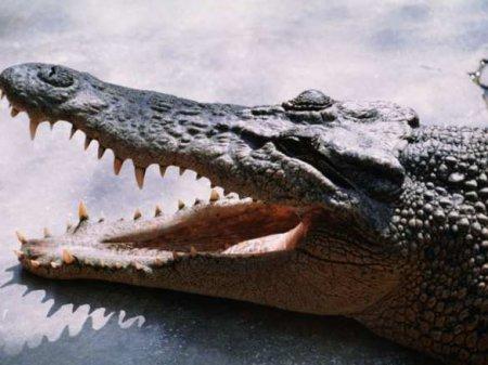 Житель Вологодской области пришел вполицию скрокодилом (ФОТО)