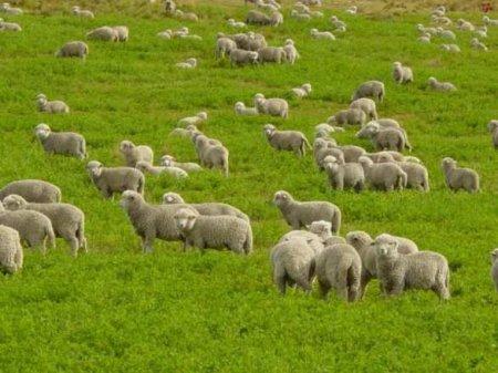 Украинца взяли в рабство и 3года заставляли пасти овец