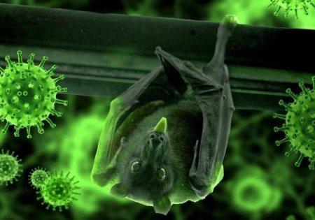Коронавирус — результат аварии в китайской лаборатории: немецкий профессор привёл доказательства