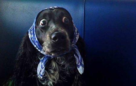 Страшная находка: Взападноукраинском селе собаки принесли водвор человеческую ногу (ВИДЕО)