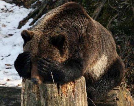 Готовьтесь — весной Россия начнёт гибнуть ещё ярче: некоторые факты прошедш ...