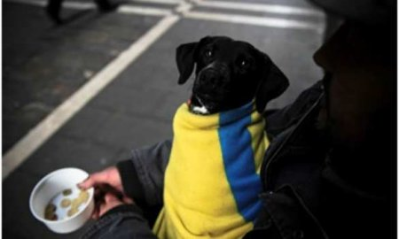 На белорусском ТВ рассказали, как украинцы ищут еду на помойках, пока Зеленский стримит из роскошного кабинета (ВИДЕО)