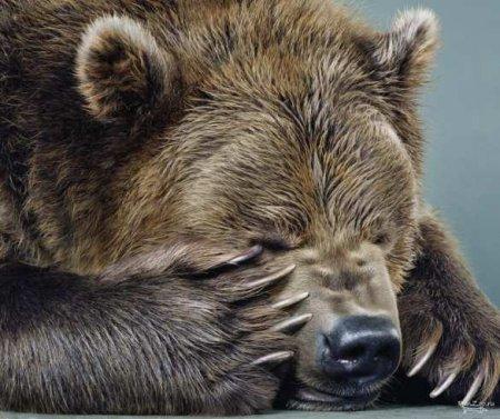 Некоторые факты прошедшей недели о «гибнущей» России (ФОТО)