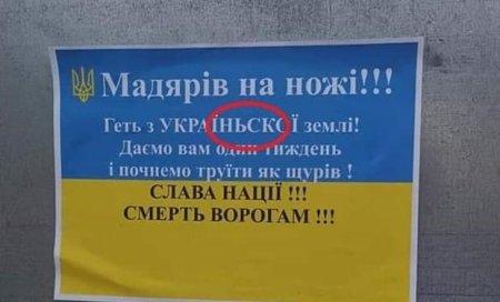 «Начнём травить как крыс»: стоит ли ждать венгерских погромов в Закарпатье (ФОТО)