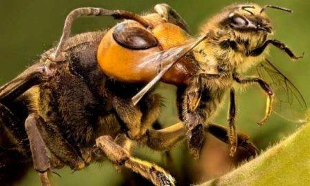 Укрпочта убила миллионы пчёл (ФОТО)
