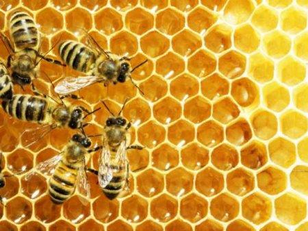Скандал с массовой гибелью пчёл в «Укрпочте» приобретает неожиданный оборот (ВИДЕО)