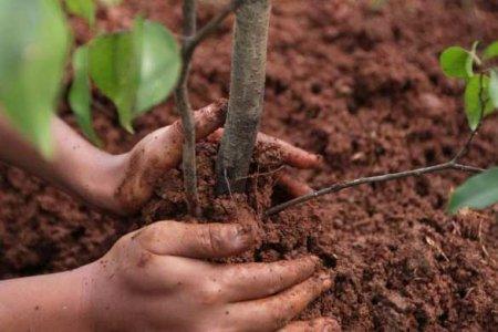 80% саженцев из «миллиарда деревьев Зеленского» погибнут — вердикт Минэкологии Украины