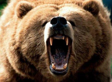 Цирковой медведь напал набеременную дрессировщицу вОрле (ВИДЕО)