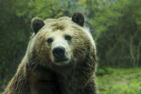 Браконьеры илирыбаки? Подробности резонансной истории субийством медведя (ФОТО)